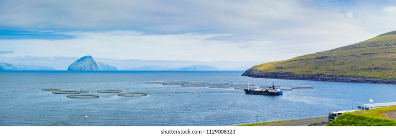 Salmon farm rings floating on calm water,Atlantic Ocean,  Faroe Islands (Faroes), Denmark, Europe
