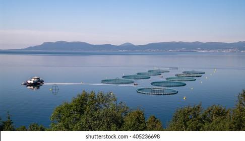 Salmon fish farm near Tante Klara's Kro at Vikebukt, Norway.