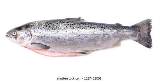 Salmon fish on white background
