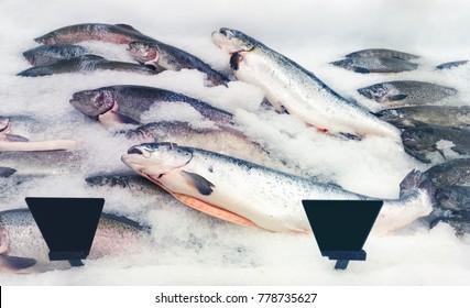 salmon fishes assortment