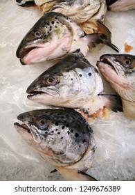 Salmon head cut for sale
