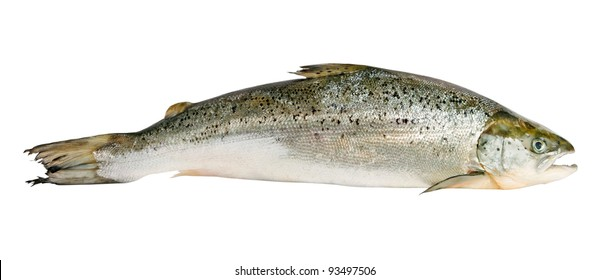 Salmon isolated on white surface.