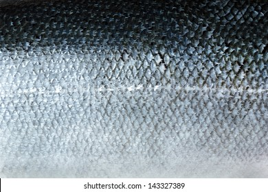 Salmon skin texture background