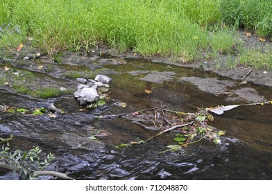 A salmon spawning stream surrounded by green grass in the American west in the daytime.