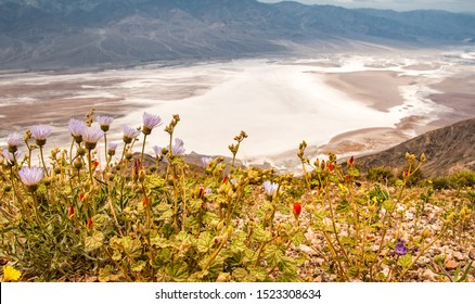 Salt Badwater Basin Panamint Mountains from Dante's View Death Valley National Park, with blossoming flowers on the foreground.