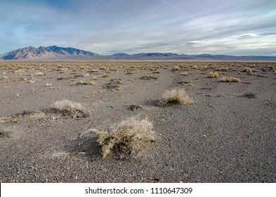 A salt desert scrub community with sparse vegetation, desert pavement in the interspaces, and a dry lake bed in the distance. Armagosa Valley, Nye County, Nevada.
