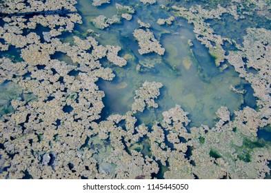 Salt lake texture