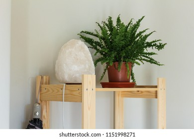Salt Lamp with a Plant