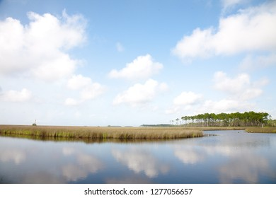 Salt marsh in coastal Mississippi with a stand of Long Leaf Pine trees in the distance on a sunny day.