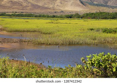 Salt Marsh in Maui Hawaii