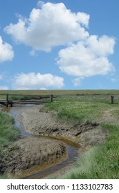 Salt Marsh in North Frisia on Eiderstedt Peninsula at wadden Sea,Schleswig-Holstein,Germany