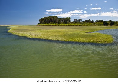 A salt marsh on Cape Cod, Massachusetts, serves as an important nursery for both fish and invertebrates that live in protected bays and in the open ocean.