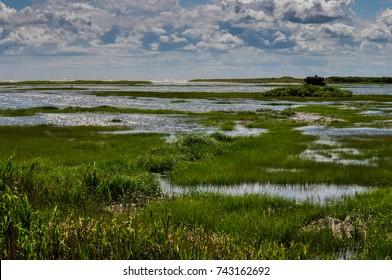 Salt Marsh Pond Leading To Ocean on a Sunny Summer Day
