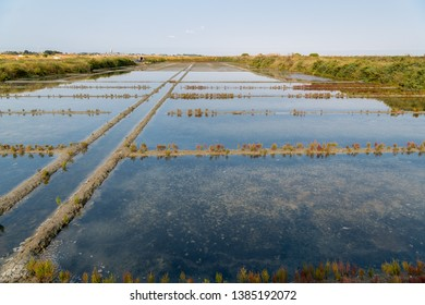 Salt marshes of Guerande (France) on a sunny day in summer