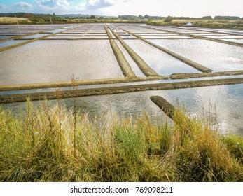 Salt marshes in Guerande peninsula in France
