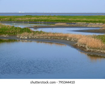 salt marshes at the north sea coast with green grass and blue water