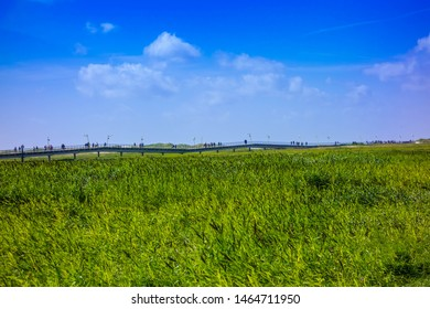 Salt marshes on the North Sea at blue sky