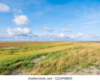 Salt marshes with sand couch and marram grass and sea lavender in nature reserve Boschplaat on Frisian island Terschelling, Netherlands