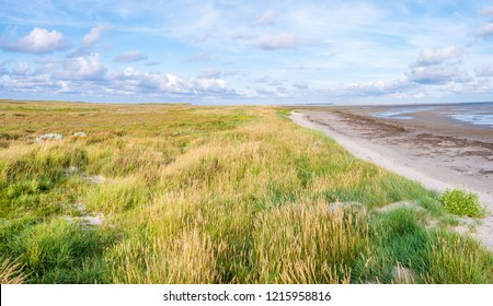 Salt marshes with sea lavender, dunes with sand couch and marram grass and tidal flats at low tide of Wadden Sea on Boschplaat, Terschelling, Netherlands