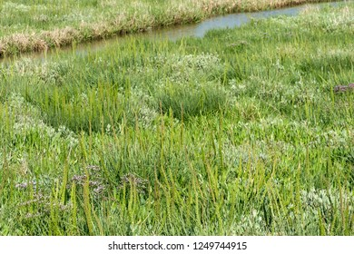 Salt marshes at the transition from sea to land, North Sea coast, Schleswig-Holstein, Germany
