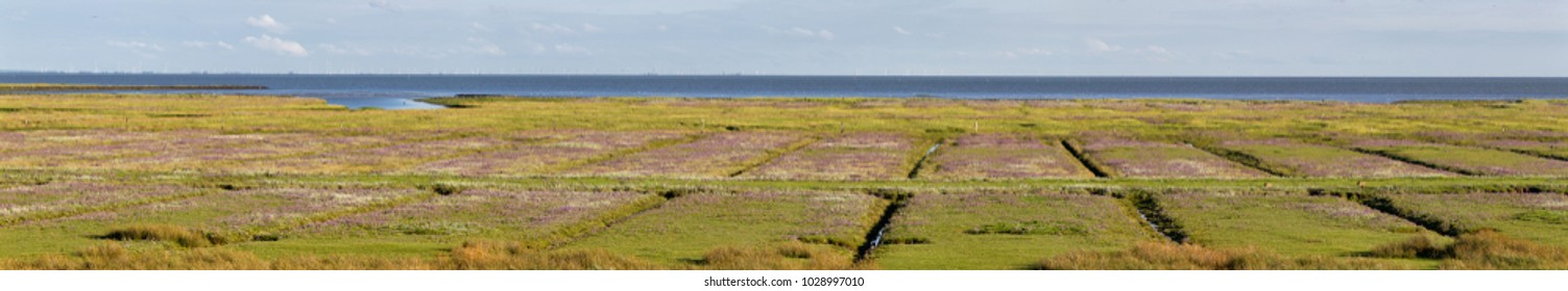 Salt marshes and wadden sea on the north sea island Juist in East Frisia, Germany, Europe.
