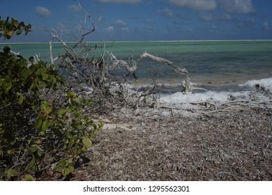 Salt pans with salt foam forming.  Bonaire.  Dutch Caribbean.
