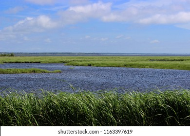 salt water marsh in Nova Scotia