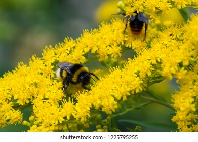 Bred Bumble Images, Stock Photos & Vectors | Shutterstock