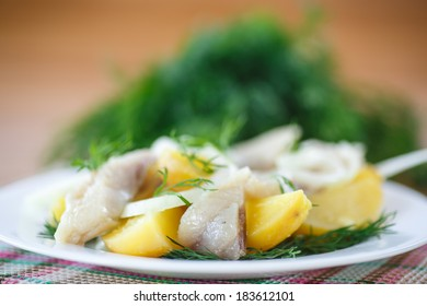 salted herring with boiled potatoes and dill on a plate