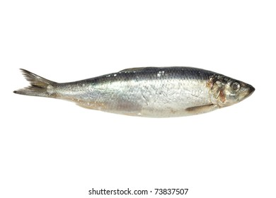 salted herring on white background