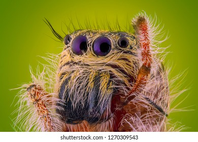 Salticidae or jumping spiders are a family of spiders consisting of more than 5,000 species in 530 generations or about 13% of all spider species that make Salticidae the largest family of spiders