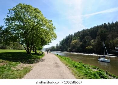 The Saltmarsh walk at Totnes Devon