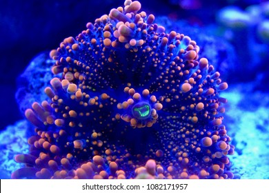 Saltwater Aquarium Fish and Coral