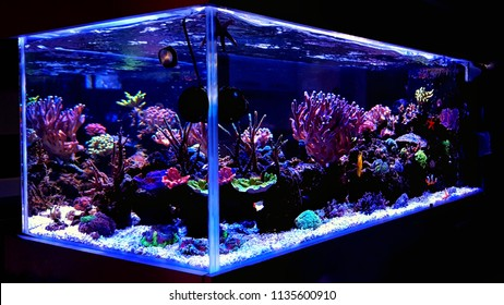 Saltwater coral reef aquarium at home is most beautiful live decoration