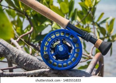 saltwater fly fishing rod in mangrove -Caribbean sea-  los roques venezuela