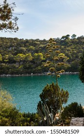 Saltwater lakes National Park on the island Mljet, Croatia. Mediterranean coast with greenery, a blooming agave in the nature creating a calm scene small lake turquoise bright colored water vertical