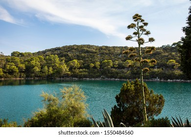 Saltwater lakes National Park on the island Mljet, Croatia. Mediterranean coast with greenery, a blooming agave americana in the nature. Small lake with bright turquoise colored water. Mindful, calm