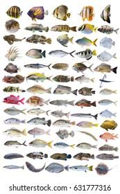 Saltwater marine fish type isolated on white background,aquatic life set