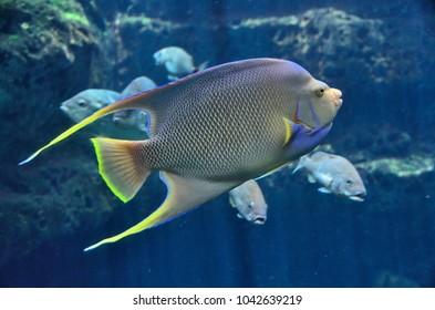 Saltwater Tropical fish at indoor Aquarium