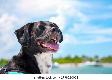 Salty Dog enjoys boat ride island life in Florida during summer. Good boy happy to be boating. Rescue pet taking freedom ride boating in the Indian River Lagoon in Fort Pierce.