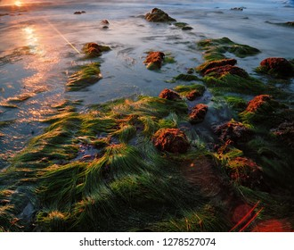 A salty patch of grassy seaweed emerges from the depths of the ocean as the lowering tides reveal the marine pools.