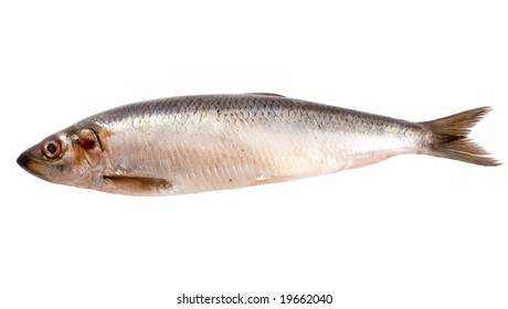 salty tasty herring herring with fins and scales on white background