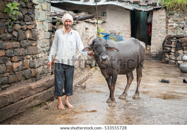 SALUNKWADI, INDIA - August 11, 2016: Indian rural man with buffalo in rural village Salunkwadi, Ambajogai, Beed, Maharashtra, India, Southeast Asia.