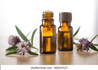 Salvia essential oil and fresh salvia leaves and blossom