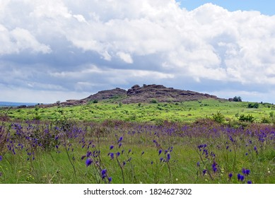 "Salvia nutans, nodding sage. Steppe. National Park "" Stone Tombs "". National Nature Sanctuary. Donetsk. Ukraine"
