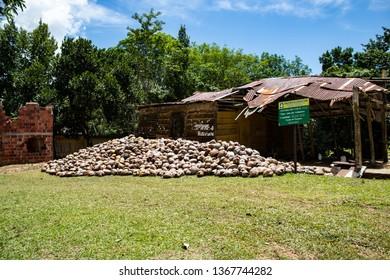 samana, Dominican Republic, 10 april, 2019 // Coconut farm in the Dominican Republic: mountain of coconuts on the lawn