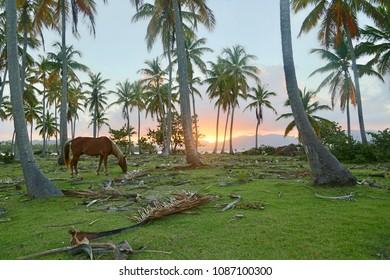 Samana in Dominican Republic