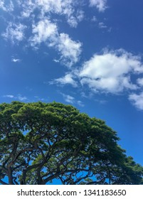 Samanea saman (also known as Monkeypod and Rain Tree) with blue sky and fluffy white clouds in Hawaii