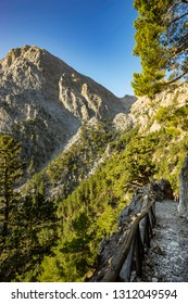 Samaria gorge forest in mountains pine fir trees green landscape background