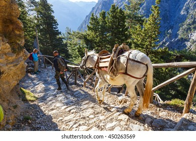 Samaria Gorge, Greece - MAY 26, 2016: horses led by a guide, are used to transport tired tourists in Samaria Gorge in central Crete, Greece. The national park is a UNESCO Biosphere Reserve since 1981